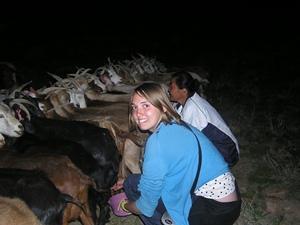 몽골 프로젝트 봉사자들이 염소 젖을 짜고 있다