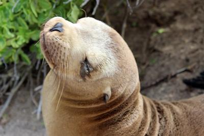 에콰도르 갈라파고스 섬의 바다사자