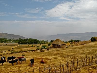 에티오피아 농장
