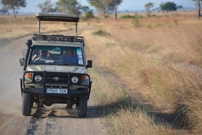 케냐에서 게임드라이브를 하는 지프차