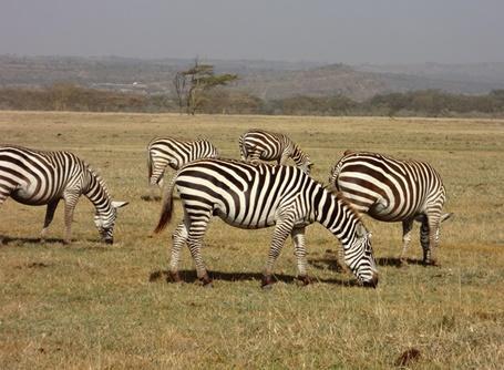 케냐 봉사활동