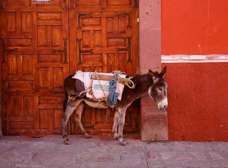 멕시코 봉사활동