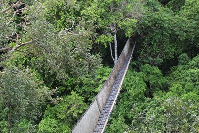 페루 환경보호 프로젝트 캐노피 워크웨이