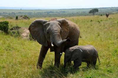 아프리카 탄자니아 국립공원의 코끼리