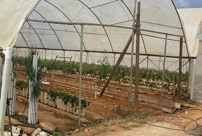 자메이카 농장 프로젝트