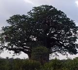 Different types of trees surrounding the Conservation project in South Africa