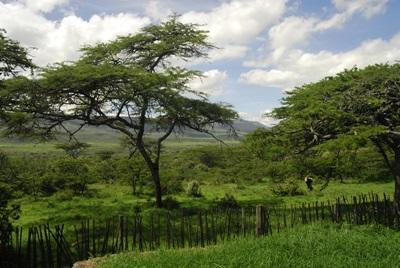 프로젝트 어브로드 케냐 환경보호 프로젝트 활동지