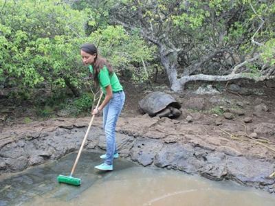 에콰도르 육지거북 보호 센터에서 연못을 청소하고 있는 봉사자