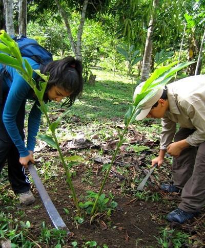 페루 환경보호 프로젝트 봉사자가 열대 우림 보고서를 점검하고 있다