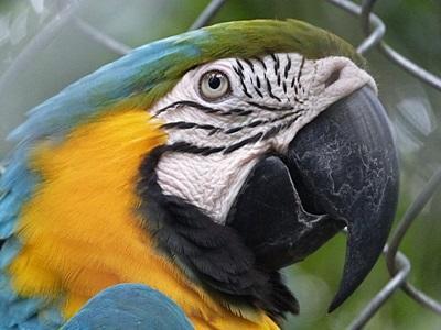 페루 아마존 밀림 보호 활동지에서 볼 수 있는 앵무새