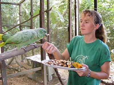 페루 야생 보호 활동 봉사자가 아마존 정글에서 앵무새에게 먹이를 주고 있다