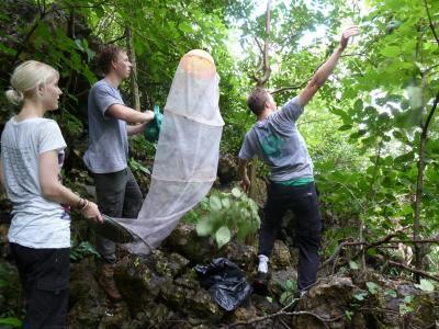 프로젝트 어브로드 코스타리카 봉사자들이 나비보호 활동을 하고 있다