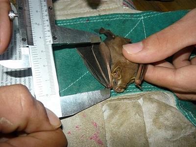 코스타리카 환경보호 프로젝트에서 개구리에 대해 조사하고 있다