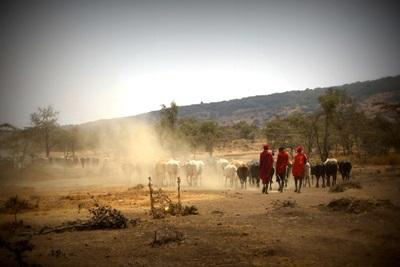 탄자니아 마사이 부족 지역사회에서 봉사활동하기
