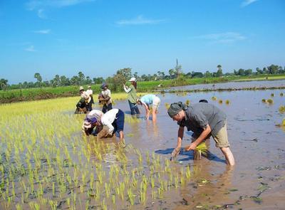 캄보디아에서 농사를 돕고 있는 참가자