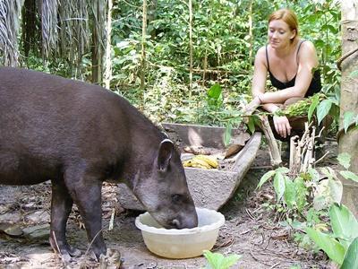페루의 환경보호 고교생 봉사자가 정글에서 동물에게 먹이를 주고 있다