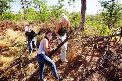 남아공 환경보호 활동에서 식물을 돌보는 청소년 봉사자들