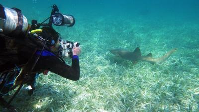 벨리즈에서 해저환경 리서치를 하고 있는 고교생 참가자