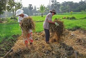 농업 & 농장