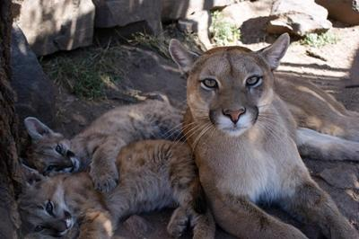 아르헨티나의 동물보호 프로젝트에 있는 야생 동물들
