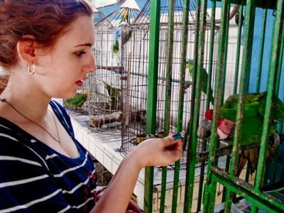 수의학 봉사자가 멕시코의 동물재활센터에서 새장 속 새에게 먹이를 주고 있다