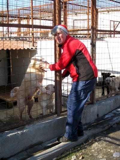 봉사자가 루마니아에서 우리 안에 있는 개들을 돌보고 있다