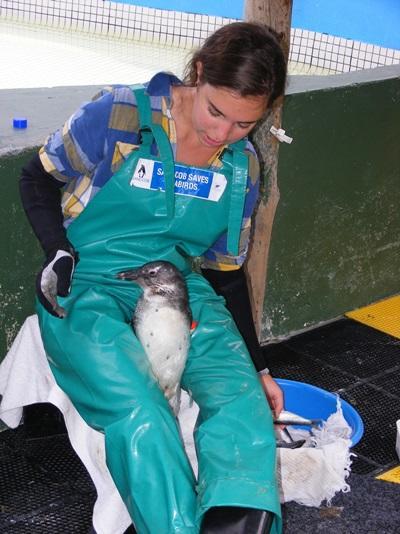 수의학 봉사자가 남아공에서 펭귄들을 치료하고 있다