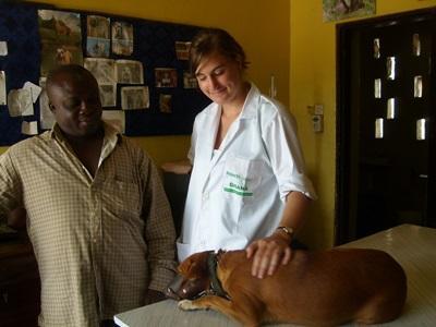 멕시코의 수의학 인턴이 직원을 도와 아픈 개를 치료하고 있다.