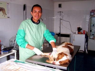 루마니아의 수의학 프로젝트 인턴이 개를 치료하고 있다