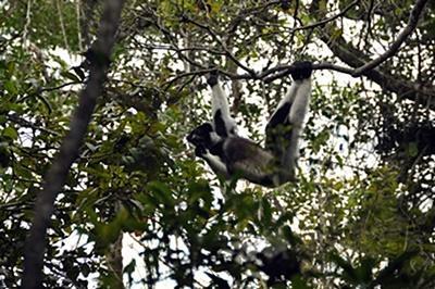 마다가스카르 환경보호 안다시베 국립공원의 희귀동물